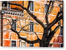 Leafless Tree In Venice Acrylic Print