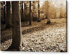 Leafy Autumn Woodland In Sepia Acrylic Print by Natalie Kinnear