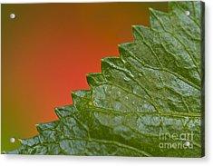 Leafy Acrylic Print by Heiko Koehrer-Wagner