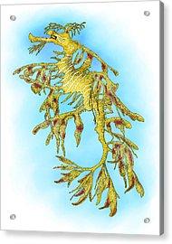 Leafy Sea Dragon Acrylic Print by Roger Hall