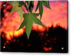 Leafy Sunset Acrylic Print by Sabre Tooth