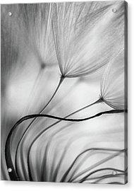 Lean On Me Acrylic Print