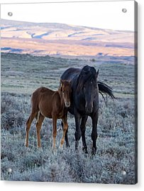 Lean On Me... Ruby And Coal Acrylic Print
