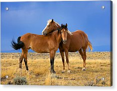Lean On Me Wild Mustang Acrylic Print