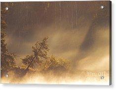 Leaning Tree In Swirling Fog Acrylic Print by Larry Ricker