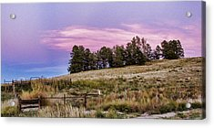 Leaning Tree On Dodge Hill Acrylic Print