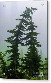 Leaning Trees Acrylic Print