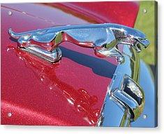 Leaper Hood Ornament On Red Jaguar Acrylic Print by Mark Steven Burhart