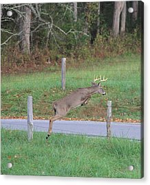 Leaping Buck In Smoky Mountains Acrylic Print by Dan Sproul