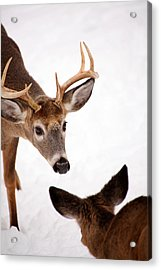 Learning A Lesson Acrylic Print by Karol Livote