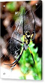 Leave The Writing To The Spider  Acrylic Print
