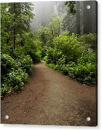 Leave Your Cares Behind Acrylic Print by Phyllis Fitzsimons