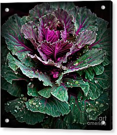 Decorative Cabbage After Rain Photograph Acrylic Print