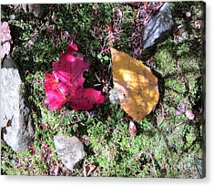 Leaves And Shadows Acrylic Print by Linda Marcille