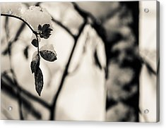 Leaves And Snow Acrylic Print by Andreas Levi