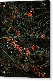 Leaves By Night Acrylic Print by Guy Ricketts