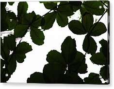 Leaves Drifting Acrylic Print by James Knight