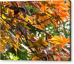 Leaves Acrylic Print by Ernest Puglisi