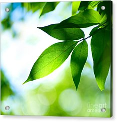 Acrylic Print featuring the photograph Leaves Green by Boon Mee