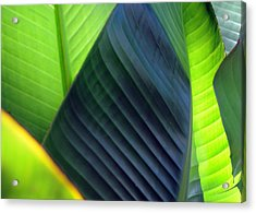 Acrylic Print featuring the photograph Leaves - Green by Haleh Mahbod