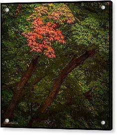 Leaves In Fall Acrylic Print by LeeAnn McLaneGoetz McLaneGoetzStudioLLCcom