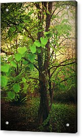Leaves In My Hair Acrylic Print by Laurie Search