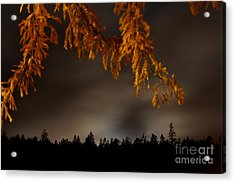 Leaves In The Night II Acrylic Print by Phil Dionne