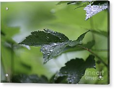 Leaves In The Rain Acrylic Print