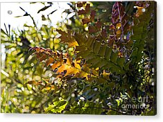 Leaves Acrylic Print by Kate Brown