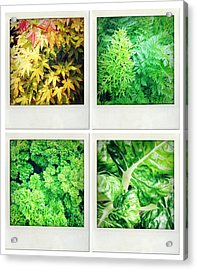 Leaves Acrylic Print by Les Cunliffe