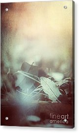 Leaves Of Time  Acrylic Print by Trish Mistric
