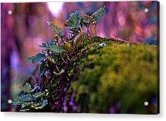 Leaves On A Log Acrylic Print