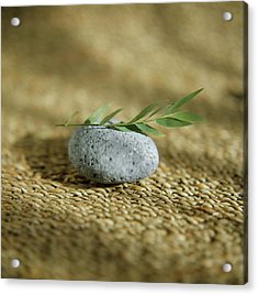 Leaves On A Pebble Acrylic Print by Cristina Pedrazzini/science Photo Library