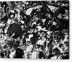 Acrylic Print featuring the photograph Leaves On A Tree Ll by Laura  Wong-Rose