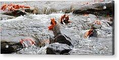 Leaves On Falling Water Acrylic Print