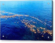 Leaves On The Ocean Acrylic Print