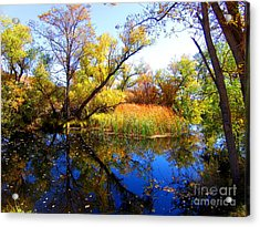 Leaves On The Pond Acrylic Print by Marilyn Diaz