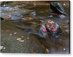 Leaves On The River Path Acrylic Print by Andres Leon