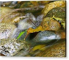 Leaves On The Rocks Acrylic Print