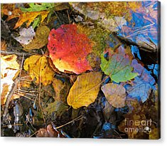 Leaves On Water Acrylic Print by Linda Marcille