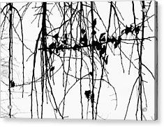 Leaves Acrylic Print by Susie DeZarn