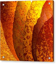 Leaves Unmasked Acrylic Print