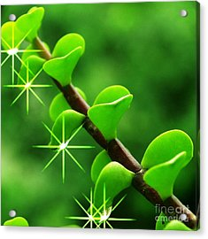 Leaves With Stars Acrylic Print