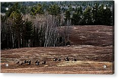Leaving Town For The Holidays Acrylic Print by Susan Capuano