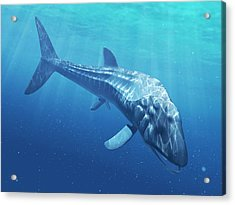 Leedsichthys Prehistoric Fish Acrylic Print