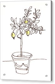 Lemon Tree Acrylic Print