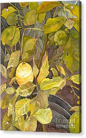 Lemon Tree Acrylic Print by Sandy Linden