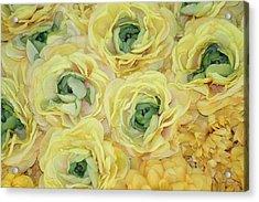 Lemons And Limes Acrylic Print by Patrisha Gill