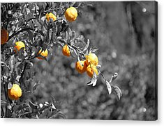Lemons Acrylic Print by Chris Whittle