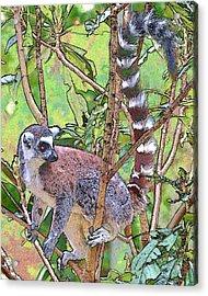 Lemur Sketch Acrylic Print by Dan Dooley